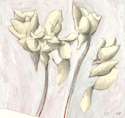 2001-pflanzen-bleist-gouache-10x10-5